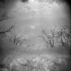 Silver Lake in Winter #16 (LowerDarnley) Tags: holga winter ice water saugusriver saugus ma trees reflection leaf floating