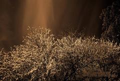 Naturaleza en la Ciudad (Thanks for + 600.000 Views) Tags: cursospermanentesdefotografía art afiap america beautiful color clasesdefotografía cursospersonalizados nikon fine chile photographer photography pro viñadelmar vregión arte ventadeimagenes estudiodefotografia 2019 nature natu naturaleza south texturas zoom campo blancoynegro animal naturelover