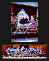 Shark in the Pool (jpmatth) Tags: digital color canon eos 5d mk2 lenstagged ef35mm20 taylorville illinois train car boxcar graffiti shark jaws snow winter diptych 2018