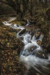 otoño entre sadas. (jetepe72) Tags: sedas rio otoño colores paisaje landscape nature naturaleza nikon 1635