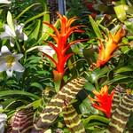 Toronto Ontario - Canada  - Allan Gardens Botanical Gardens - The Most Unique Cacti -  Here thumbnail
