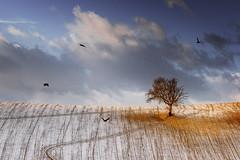 My Favourite Place (emanuelezallocco) Tags: landscape tree clouds birds photography 2019 winter inverno paesaggio marche italia best fotografia albero colline hills