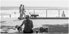 It's a dog's life (geemuses) Tags: manly manlybeach nsw australia sand ocean water salt wave girl woman bikini street streetphotography scenic scenery bw black white blackandwhite monochrome dog dogs view