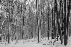 Maybe a little snow this weekend..... (Kevin Povenz Thanks for all the views and comments) Tags: 2018 february kevinpovenz westmichigan jenison michigan ottawa ottawacounty ottawacountyparks hagerpark winter snow blackandwhite bw outside outdoors trees cold forest woods