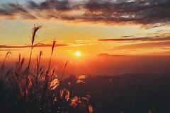 香港 飛鵝山 Kowloon Peak, Hong Kong #sunset #kowloonpeak #feingoshan #芒草 #飛鵝山 #golden #magichour  #canon6dm2 #24105mm (phil_foto) Tags: canon6dmii 日落 飛鵝山 24105mm sunset kowloonpeak feingoshan 芒草