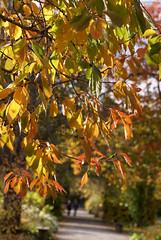 Herbstlaub / autumn leaves (HEN-Magonza) Tags: botanischergartenmainz mainzbotanicalgardens rheinlandpfalz rhinelandpalatinate deutschland germany herbst autumn flora herbstlaub autumnleaves