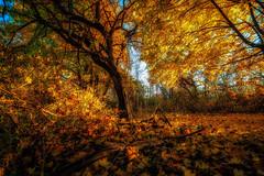 Fall Sunrise (Roy Manchester) Tags: catskill newyork unitedstates us 5dmk4 1740l eos ef llenses landscape light leaves fall outdoors orange
