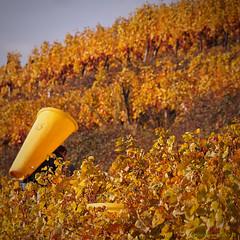 Domaine Schlumberger (VinéoNews Alsace) Tags: routesdesvins alsace journal magazine vinéonewsalsace vin viticulture rouffach lescarnetsdevendanges domaineschlumberger