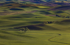 A Tree Stands alone in the Shadowlands (Anne Strickland) Tags: palouse washington thepalouse wheatfields rollingfields farmland dreamlands shadows light lightandshadows pullmanwashington lonetrees inspiration shadowsandlight rollinghills pacificnorthwest usalandscapes americanlandscapes