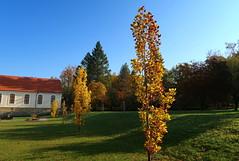 Chateau park in Rychnov nad Kněžnou (ZdenHer) Tags: czechrepublic park chateaupark autumn landscape tree canonpowershotg7xmarkii