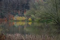 Autumn colours (aj.lindeboom) Tags: autumn forrest landschap