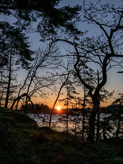 First of the sun (waledro) Tags: sunrise neckpointpark trees nanaimo