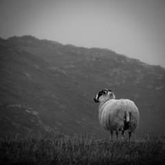 où va le monde? (objet introuvable) Tags: blackandwhite bw noiretblanc nb nature ecosse scotland lewis hébrides pensées thoughts harris