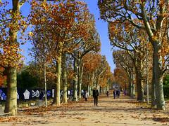 Automne au Jardin des Plantes (Raymonde Contensous) Tags: paris jardindesplantes arbres automne nature paysage jardins expositions