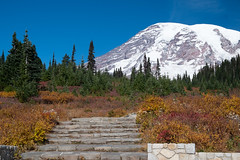 Fall in Paradise (Laura Jacobsen) Tags: mountains mtrainier mtrainiernationalpark washington