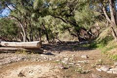 Bank of the Murrumbidgee River Corridor, AU (Jim 03) Tags: murrumbidgee river headwaters kosciuszko national park murray balranald nsw aboriginal ngunnawal wiradjuri nari australia