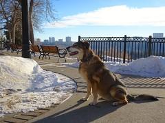 Q Profile / On Our Break (iMitchiMac) Tags: littledoglaughedstories