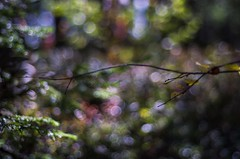 Bokeh (Stefano Rugolo) Tags: stefanorugolo pentax k5 pentaxk5 smcpentaxm50mmf17 ricohimaging kmount depthoffield bokeh branches abstract woods autumn 2017 manualfocuslens manualfocus manual vintagelens sweden hälsingland sverige