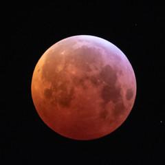 Super Blood Wolf Moon (SouthamptonPete) Tags: lunar night super moon eclipse wolf blood red southampton england unitedkingdom gb