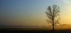 NG3_2247_s2 (ngabor_gnagygbr) Tags: tree dawn morning woodyplant sunrise field atmosphere horizon mist fog sunlight evening daytime ruralarea plain branch ecoregion grassland landscape cloud meadow prairie haze sunset dusk calm sun nikon