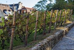 La Vigne de Montmartre / Виноградники Монмартра (dmilokt) Tags: город city town пейзаж landscape сад парк garden park dmilokt