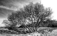 IMGP0094 (dfaulkner30) Tags: belmont snow