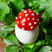 Toadstools made from boiled eggs and tomatoes