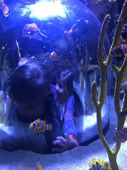 "2018-03-24-to-30-minnesotta-to-see-adam-and-sara-curl-with-family-aquarium-2_44228181864_o • <a style=""font-size:0.8em;"" href=""http://www.flickr.com/photos/109120354@N07/32346461968/"" target=""_blank"">View on Flickr</a>"
