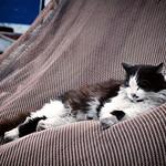 Katze entspannt im Fischernetz thumbnail