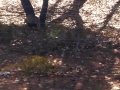 Desierto de Badain Jaran. Lago Nouertu. China (escandio) Tags: tejon animales lagonouertu lago china2018 china badainjaran 2018 mongoliainterior
