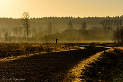 The morning shooter! (suman.photo) Tags: light olympia washington nature nikon morning landscape trees road