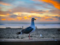 This guy was blocking my #sunset photo. #ocean #sandiego #sd #lajolla #sandiegoliving #sunrise #mysdphoto #sandiego_ca #cloudporn #skyporn #igerssandiego #pacificbeach #sunsetlovers #beachlife #water #sand #sunsets #sunsetporn #delmar #waves #sunset_madne (jtnpics) Tags: ifttt instagram this guy was blocking sunset photo ocean sandiego sd lajolla sandiegoliving sunrise mysdphoto sandiegoca cloudporn skyporn igerssandiego pacificbeach sunsetlovers beachlife water sand sunsets sunsetporn delmar waves sunsetmadness surf cali downtownsd skylovers paradise chulavista