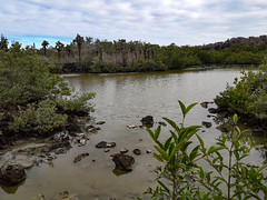 Ciénaga (dcdc887) Tags: ecuador galapagos landscape paisaje water agua ciénaga swamp lago lake lagoon laguna cactus manglar mangrove