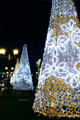 Елки на улице Модене (tatianatorgonskaya) Tags: сербия зимавсербии новыйгод рождество европа балканы путешествие блогопутешествиях блогожизнизарубежом balkans balkanstravel balkan srbija serbia europe novisad новисад зимавновисаде новыйгодвсербии новыйгодвевропе