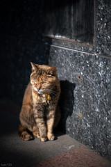 猫 (fumi*23) Tags: ilce7rm3 sony sel85f18 85mm fe85mmf18 katze gato neko cat chat a7r3 animal street ねこ 猫 ソニー emount feline
