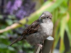DSC_1690.jpg (Jim Nicholson) Tags: bird nikon d300 nikond300 netherlands nl holland amsterdam