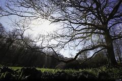 Pourquoi les taupes ont-elles des yeux? (Un jour en France) Tags: forêt arbre soleil contrejour nature canoneos6dmarkii canonef1635mmf28liiusm ciel cielpaysage sky taupe