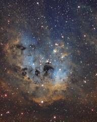 The Tadpoles Nebula IC410 (Radar Boy) Tags: thetadpolesnebula ic410 astrophotoraphy asi1600pro space astrophotograpy astro astrometrydotnet:id=nova3162843 astrometrydotnet:status=solved