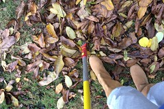 staying busy (domit) Tags: domit garden house rental wemmel belgium leaves clean autunm