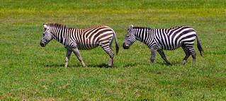 Africa Safari Lake Manyara