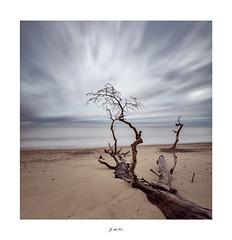 Reaching to the Light (jp appleton photography) Tags: tree fallen sand beach suffolk coast covehithe wwwjpappletoncom