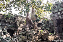 Entre les ruines 01 (Lцdо\/іс) Tags: preahkhan wat temple siemreap cambodge cambodia buddhisme buddha religion ruines archeological archaeological park angkor travel trip construction historic history khmer voyage lцdоіс kambodscha asia asian southeast