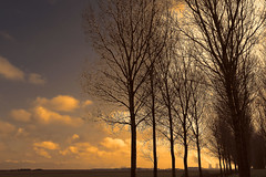 Emmadorp - The Netherlands (roland_tempels) Tags: thenetherlands nature sun trees supershot emmadorp doel