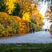 autumn in full.jpg