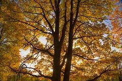 Herbstwald in der Vulkaneifel (clemensgilles) Tags: forest herbst automne fall wanderlust hiking vulkaneifel wälder bäume trees autumn eifel germany beautiful