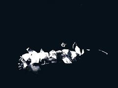 weiß auf schwarz (Peter Schüler) Tags: geiger theater blackandwhite dark flickr peterpe1 theatertotal bochum
