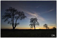 """""""Im letzten Abendlicht"""" (anton_zach) Tags: himmel sonnenuntergang sky color colors clouds landschaft licht baum bäume blau autumn abend abendsonne abendrot allee dämmerung holz herbst landscape natur naturfoto naturelovers nacht outdoor"""