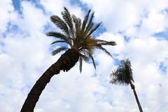 (evelynaravenaf) Tags: cielo palmas azul primavera sky palm blue green happy bent clouds spring november