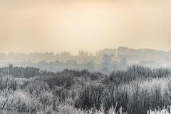 *** (Woodmen19) Tags: russia kirovregion 2018 november autumn nature crystal frost landscape flora plants meadow grass trees shrubs light