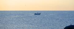 LA BARCA DE PESCA (Joan Biarnés) Tags: calelladepalafrugell baixempordà costabrava girona catalunya 285 panasonicfz1000 barca mar